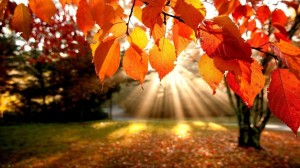 Fall-Nature-HD-Wallpaper-2-1030x579
